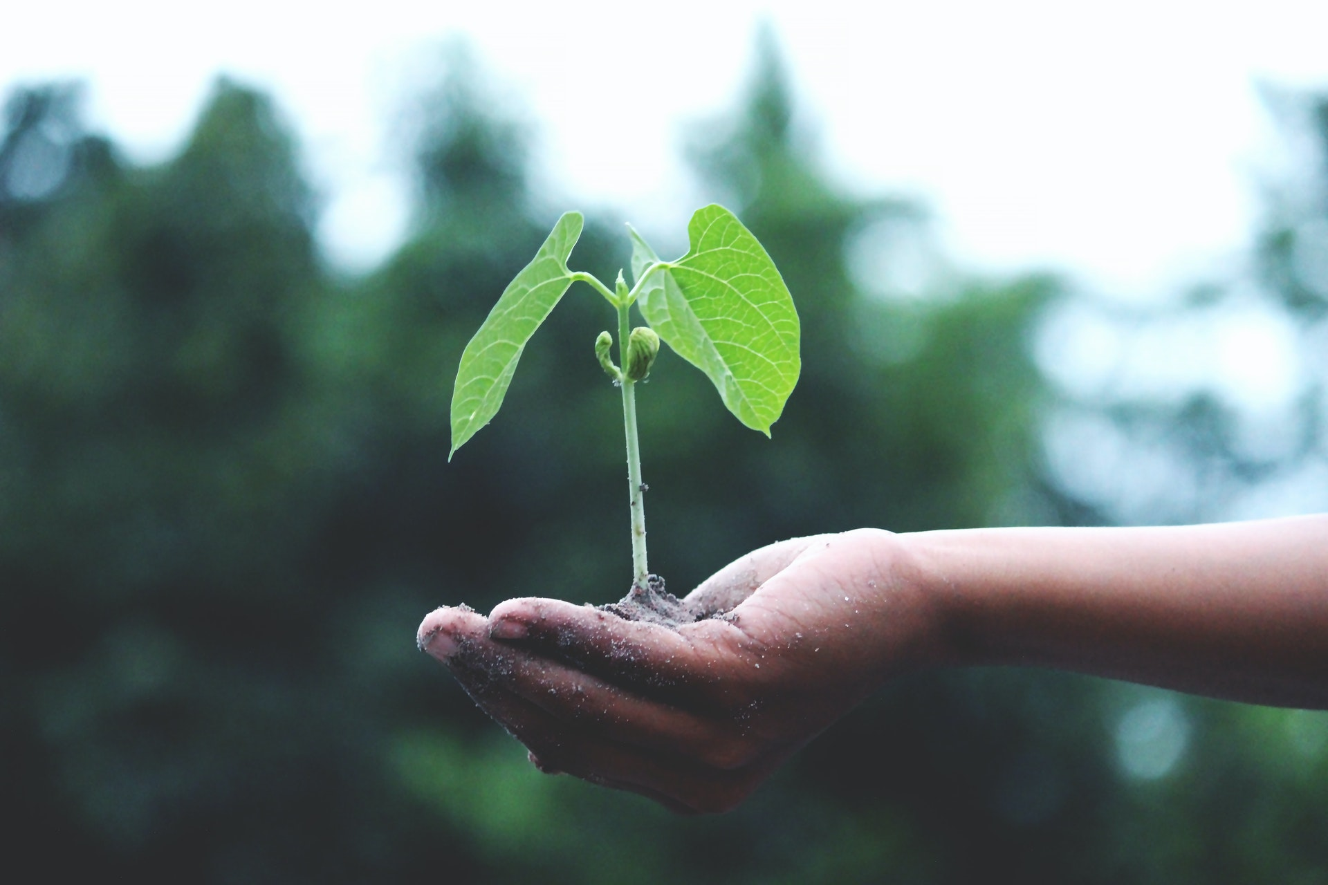 duurzaam huis plant